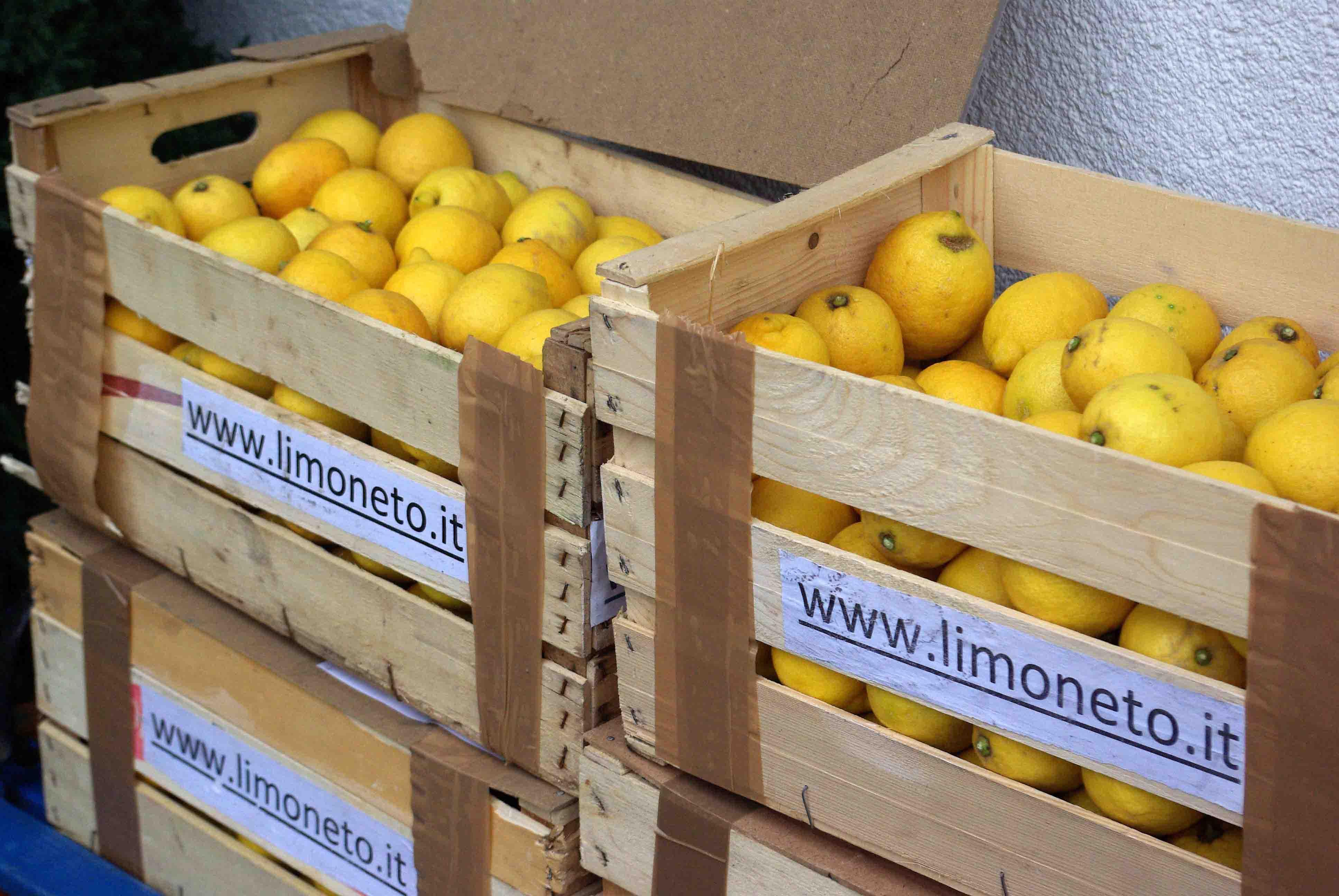 Zitronen für Pesto di Limone, Zitronenpesto, Zitronenwürzpesto