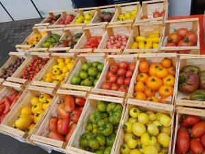 Bunte Tomatenvielfalt Nahrungsquellen Ökokiste Schwarzach