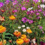 Blütenmix bio