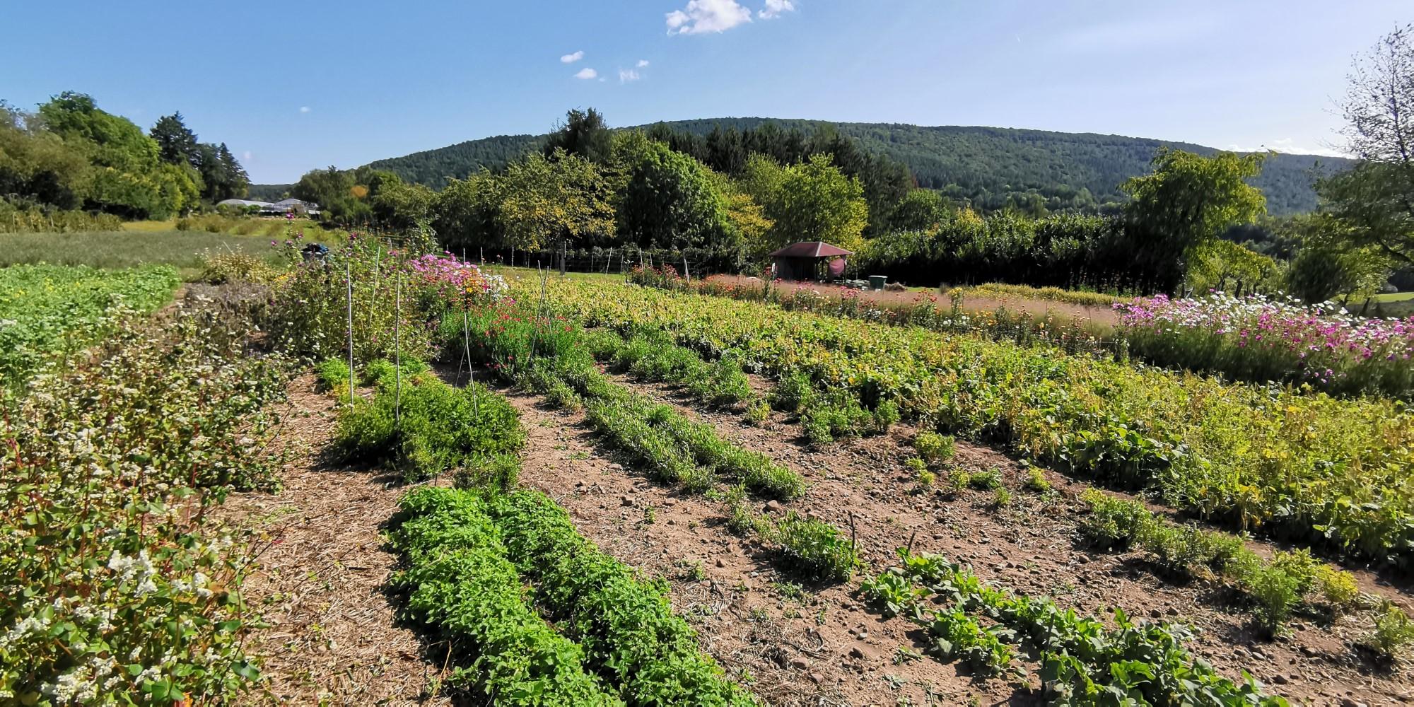 bio-Anbau Kräuter und Gewürze